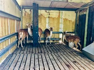 防狂鹿症!進口鹿來源產品明年起得通過實地查核