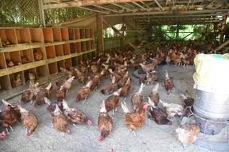 雞蛋變蛋捲 展望會培力原鄉蛋農多元發展烘培