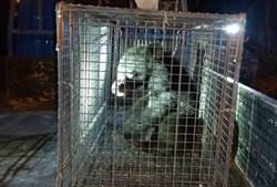 台東》南橫公路又見台灣黑熊