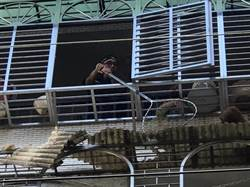 紅貴賓掉落4樓破碎遮雨棚 人民保母神救援