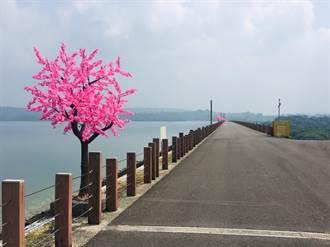 仁義潭「長出」粉紅櫻花樹惹議 公所:誤會了!