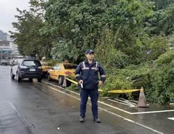 中颱米塔侵襲 基隆路樹倒塌