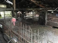 北市養豬戶全數離牧 數百年養豬事業走入歷史