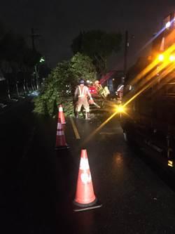 米塔颱風來襲 桃園八德路樹被吹倒
