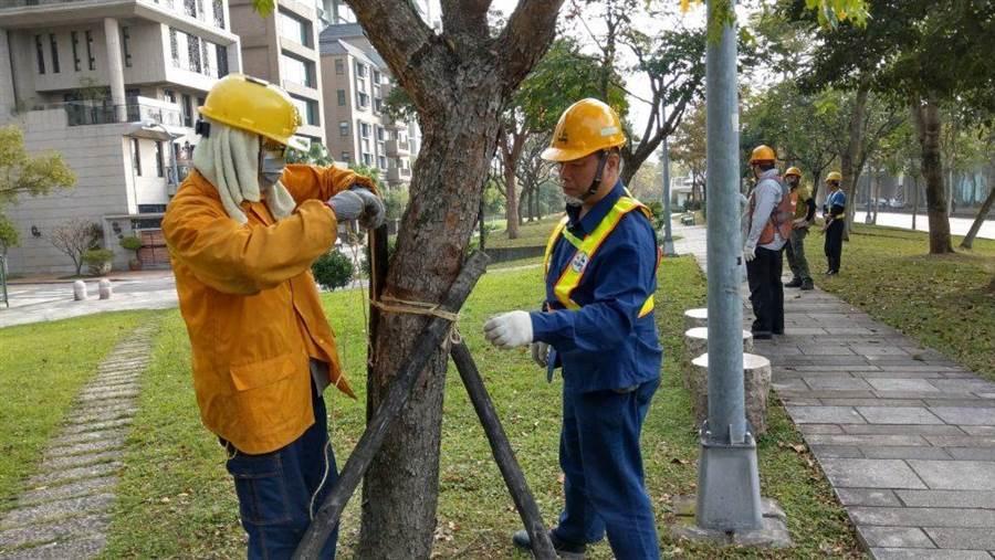 因應米塔颱風來襲,台北市政府工務局公園處加強路樹穩固支柱,避免路樹倒塌。(台北市工務局提供)