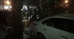 米塔颱風沒來 台中風太大吹倒大樹壓車