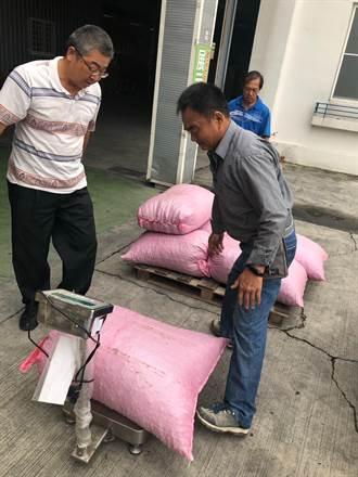 中和村社區種無患子樹 果實售生技公司賺加菜金