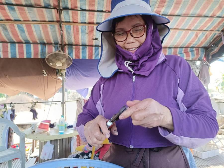 位於163縣道「阿嬤ㄟ菱角」,從育苗、栽種再到販賣,一條龍的生產模式由王新發夫婦一手包辦。(張毓翎攝)