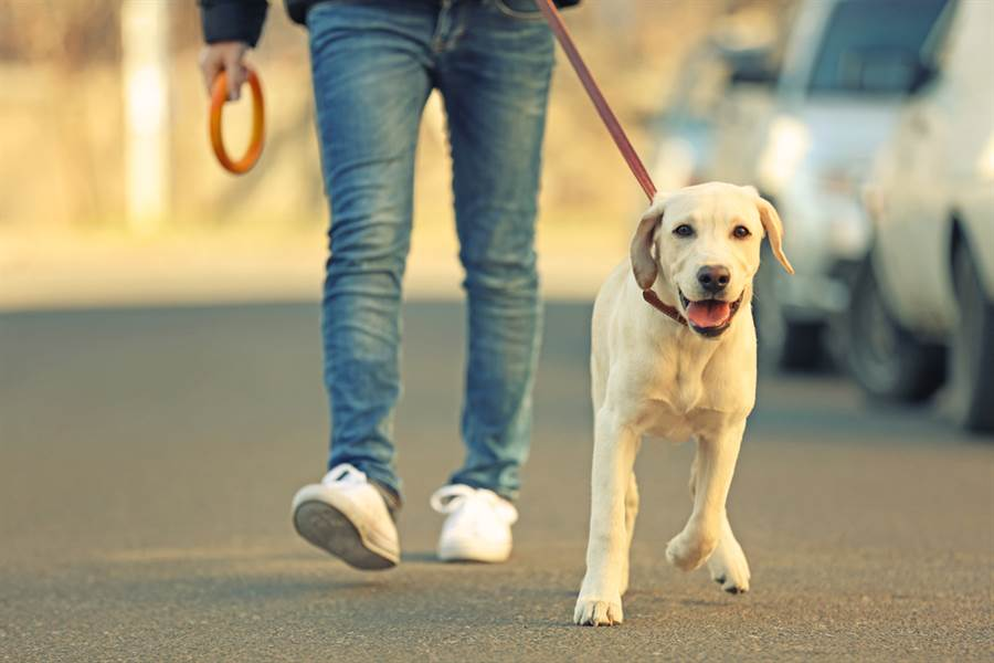 所謂行行出狀元,紐約一名男子靠每天幫人遛狗3小時,並在週末幫客人訓練犬隻,輕鬆達成年收入新台幣300萬元。(圖/達志影像)