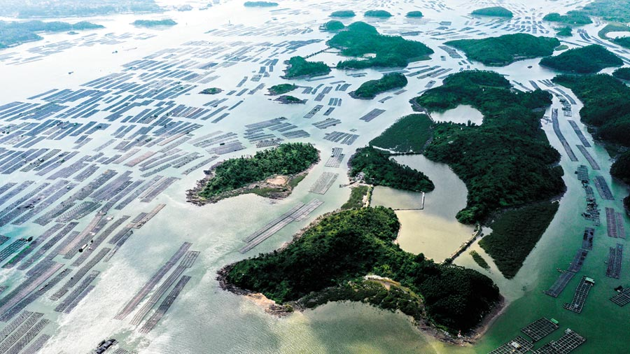 廣西欽州建海洋牧場,萬畝的生蠔養殖基地景觀。(新華社資料照片)