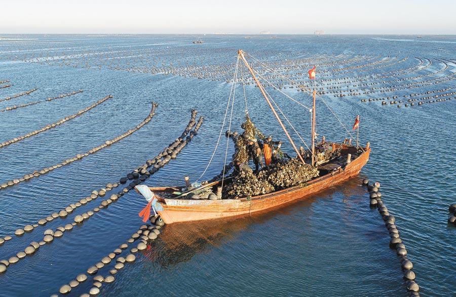 大連市海洋牧場建設,漁民在捕撈生蠔。(新華社資料照片)