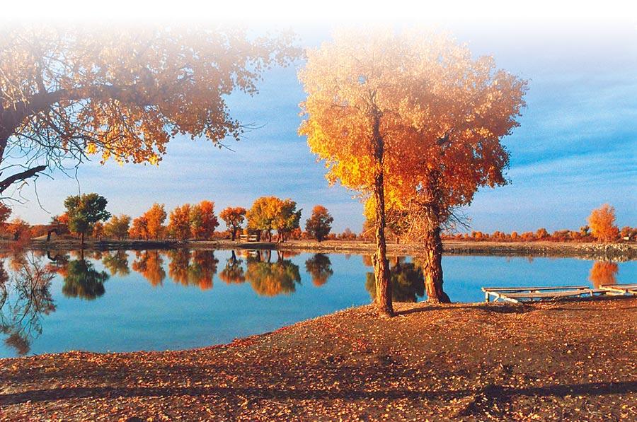 新疆塔里木河畔的胡楊林。(新華社資料照片)
