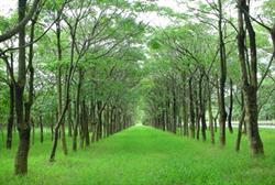 20米綠廊 「環保林園大道計畫」20年有成