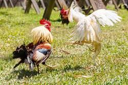 獄警放雞凌虐、木棒狂砸受刑人 驚悚畫面流出