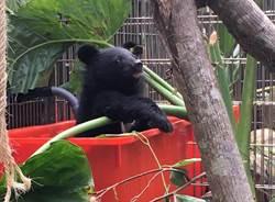 廣原小熊搬新家 泡水可愛模樣曝光