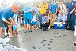 本島首次全記錄 小海龜孵化回大海