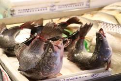 動保團體:應禁止活體弓魚行為