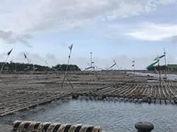 嘉義縣府明年將浮筏式蚵棚納管 保障蚵農權益