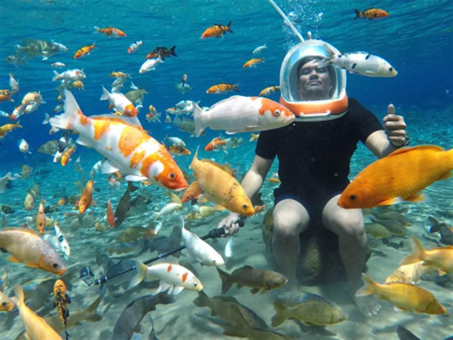 水底下自拍遊客的最愛(圖片取自/達志影像)