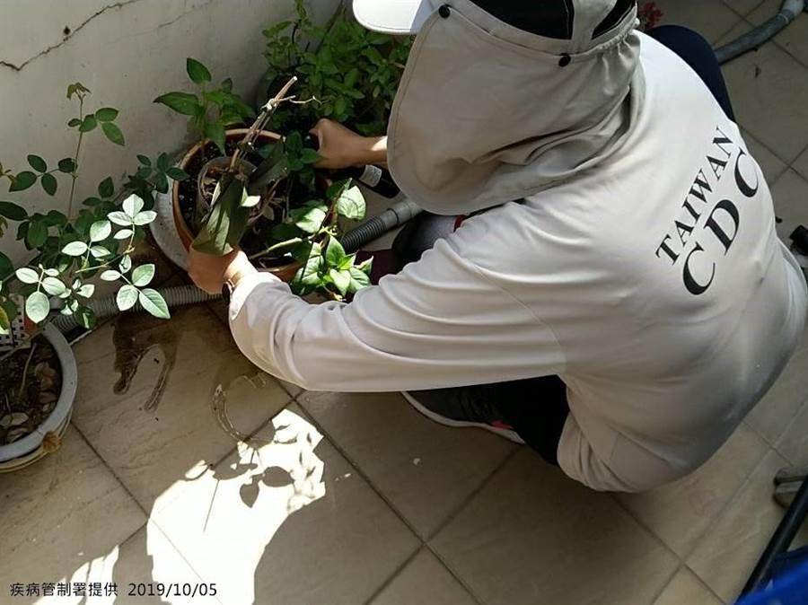 疾管署防疫人員於新北市板橋區幸福里本土屈公病個案居住地周邊查核孳生源。(疾管署提供)