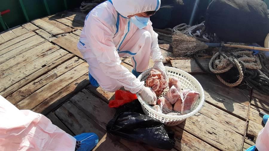 大陸漁船上發現12公斤生鮮豬肉,當場將肉沒收銷毀。(海巡提供/許家寧基隆傳真)