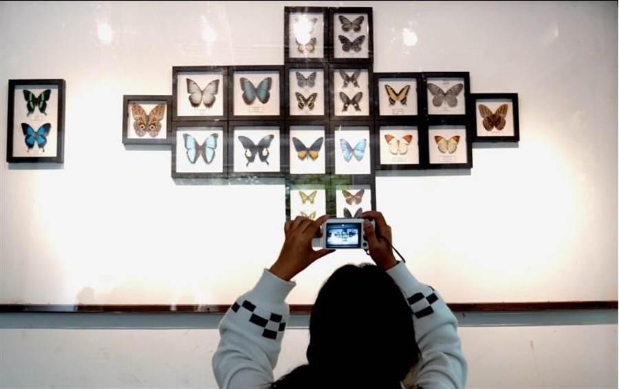10月2日,上海動物園蝴蝶館內,一名遊客正在拍攝蝴蝶標本。在上海動物園舉辦的「蝶舞申城迎國慶」第七屆蝴蝶展展覽期間,將陸續放飛約30種8萬隻蝴蝶,讓遊客每天都能漫步在「蝶海」之中。(圖/新華社)