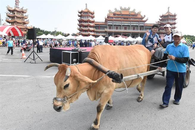 彰化縣政府創辦「2019國際海牛文化節」帶來不同凡響的體驗。(吳敏菁攝)