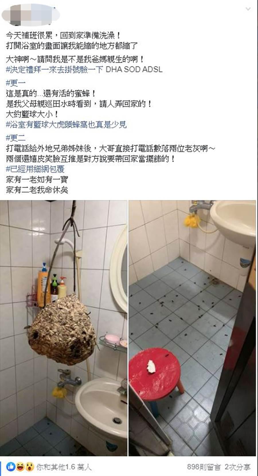 浴室裡竟有一顆約籃球大小的虎頭蜂窩(圖翻攝自/爆廢公社)