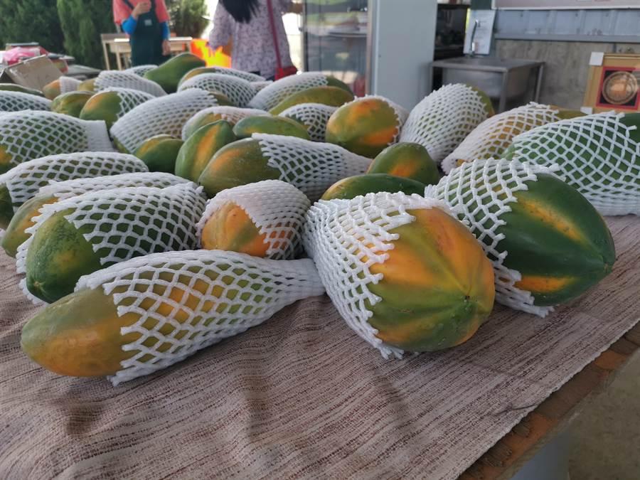 紅妃木瓜個頭壯碩,外形像是「土木瓜」但汁多味甜,遠勝土木瓜。〔謝明俊攝〕