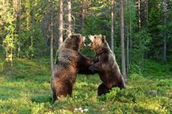 格鬥選手打贏百公斤熊 反遭嗆翻