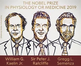 解細胞呼吸之謎!美英3學者分享諾貝爾生醫獎