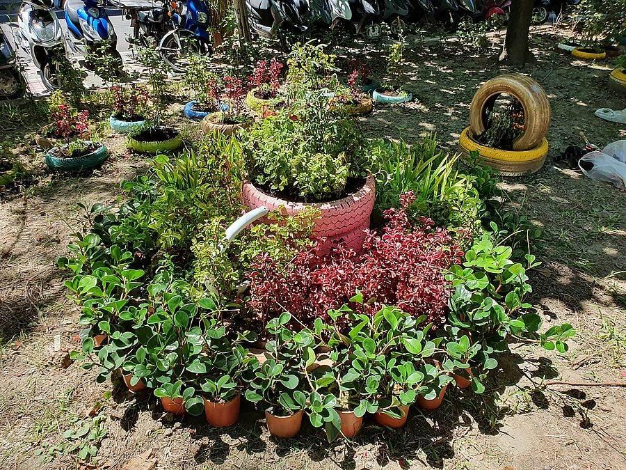 利用廢棄輪胎種植香草及景觀作物,呈現公園綠美化新樣貌。(新北市景觀處提供)