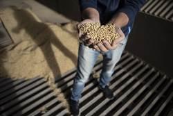 不怕關稅戰!陸新品種大豆有這功效