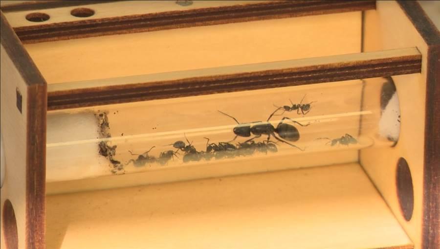 創藝青村匠人 螞蟻帝國 每一管都別有洞天。(圖/中時電子報攝)