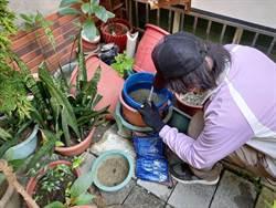 台南登革熱二型病毒剛解除  國慶連假前夕又新增1例