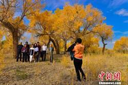 新疆克拉瑪依市烏爾禾區旅遊業呈井噴式增長