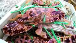 龜吼漁夫市集 國慶千元紅包抽萬里蟹