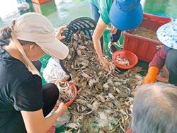 東石魚市場 民眾狂掃蟹