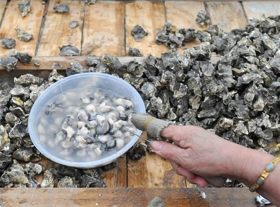 金門6處牡蠣產區採樣檢測結果,均符合衛生標準。(李金生攝)
