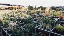 植物園版「霍爾的移動城堡」 花博地景裝置藝術獲國際獎項IFLA肯定