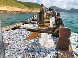 法條鬆綁 台灣白帶魚可直航輸陸
