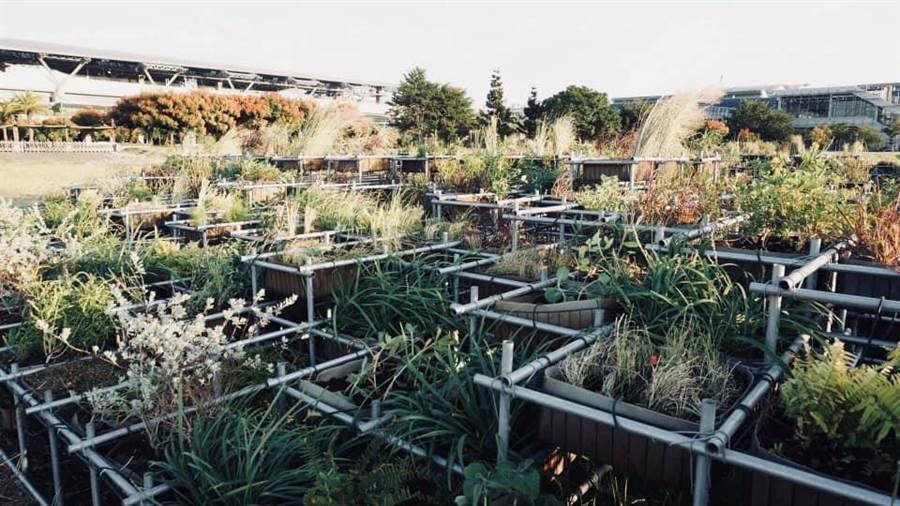 「台灣的野草地圖」依台灣地理環境海拔、區塊編輯如同立體版植物園,可以隨時拆解移動重組,在不同場所重新展示有如植物園版「霍爾的移動城堡」。(圖策展人吳書原提供/陳世宗台中傳真)