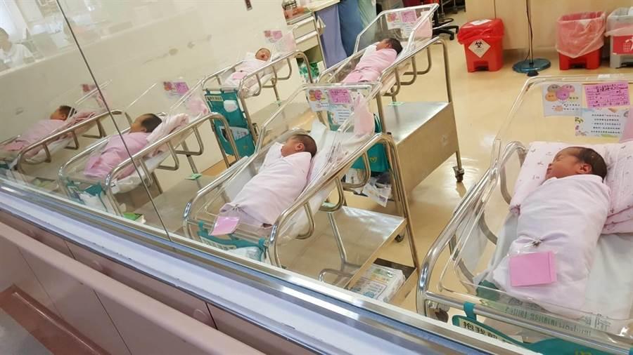 雙十國慶今天登場,截至中午,新竹市計有15位國慶寶寶報到。(新竹市政府提供/陳育賢新竹傳真)