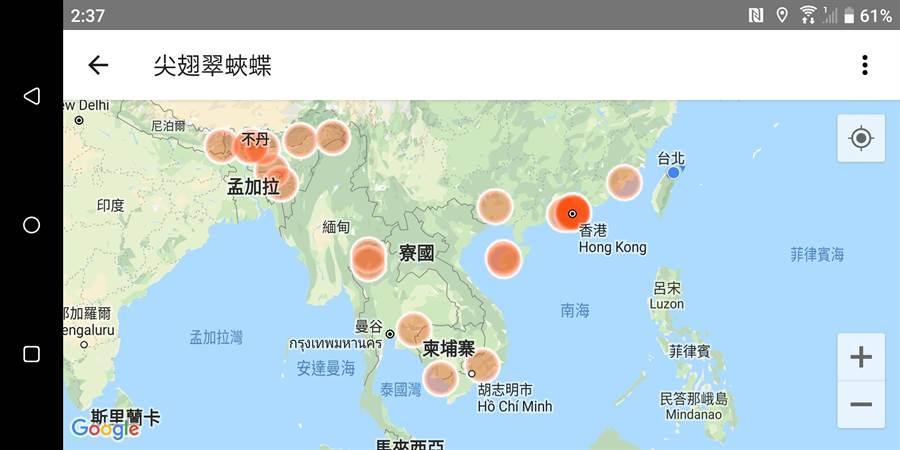 尖翅翠蛺蝶分布在大陸、東南亞,離台最近的記錄在廈門。(沈錦豐提供/許家寧基隆傳真)