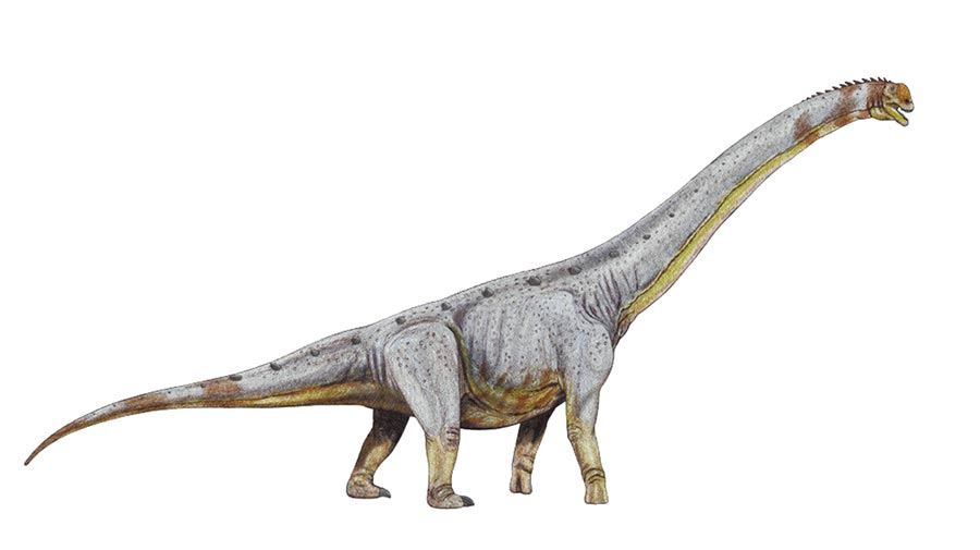 蜥腳類恐龍示意圖。(取自新浪微博@邢立達)