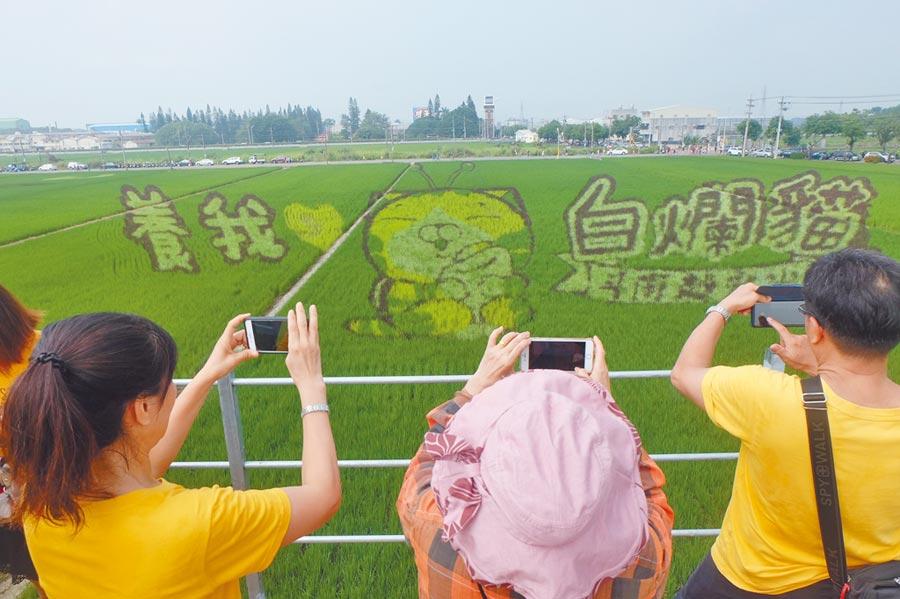 斗南鎮「白爛貓彩繪稻田」,連假登場吸引人潮。(張朝欣攝)