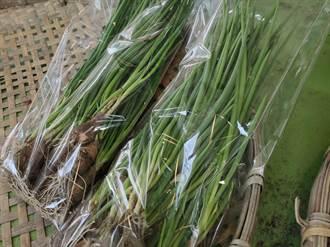 青蔥飆天價 農糧署:再10天價格回穩