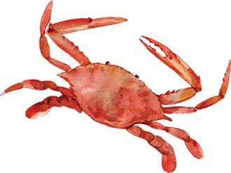 當令美食-秋令嘗鮮衝一波 蟹蟹光臨誰最靚
