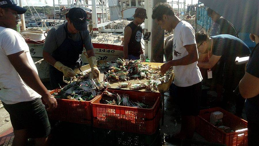 北海岸特有的萬里蟹,六至七成均來自於富基漁港。(圖取自新北市漁業處官網)