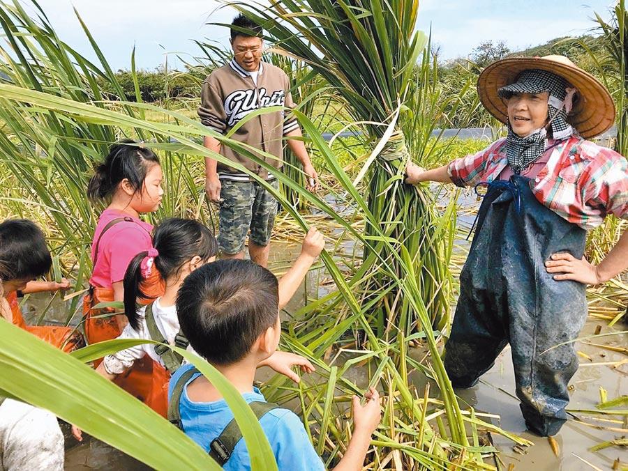 女農林紅甘姨取得「綠色保育標章」,農地提供金山學童做為食農教育場域。(春雷環境學社提供/葉德正新北傳真)
